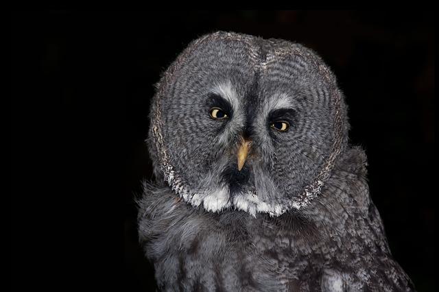 https://pixabay.com/en/owl-bird-eagle-owl-feather-animal-611646/
