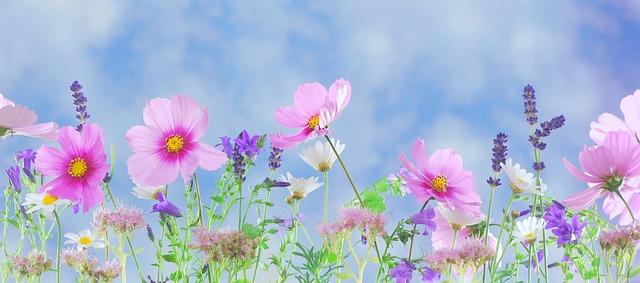 http://pixabay.com/en/wild-flowers-flowers-plant-macro-571940/