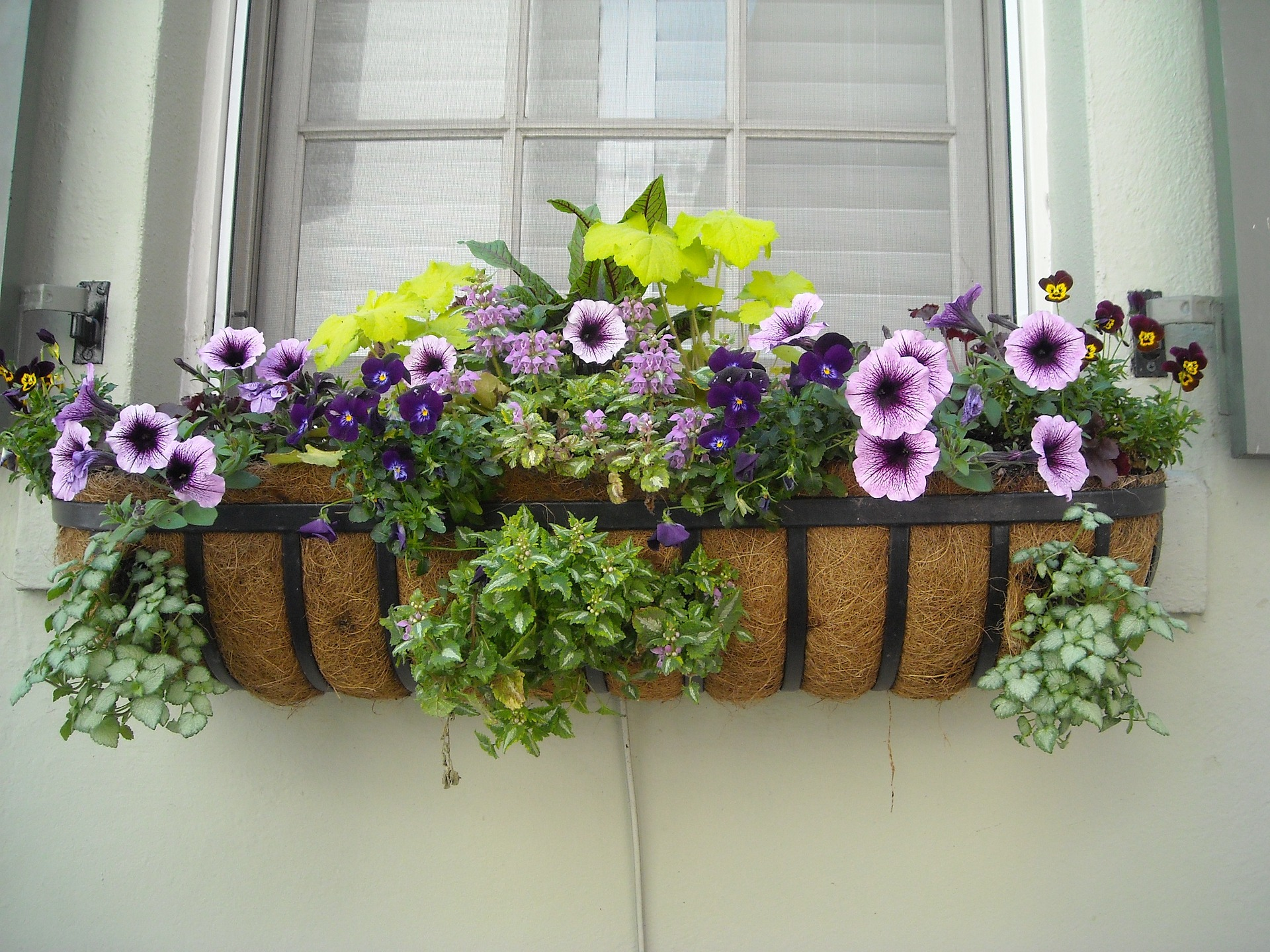 https://pixabay.com/en/window-box-flowers-window-box-891985/